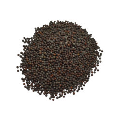 Kali Sarson Herb