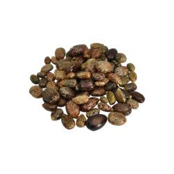Arandi Seeds Herbs
