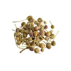 Gorakhmundi Herbs