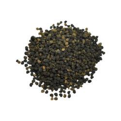 Kala Dhatura Herb