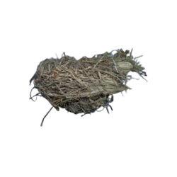 Asgar Grass